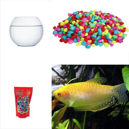 /1/-/1-Gold-Gourami-Fish-Small-Fish-Bowl-Starter-Kit-7536629.jpg