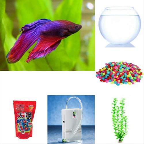 /1/-/1-Male-Siamese-Fighter-Betta-Aquarium-Fish-Fish-Bowl-Complete-Kit-7536923.jpg