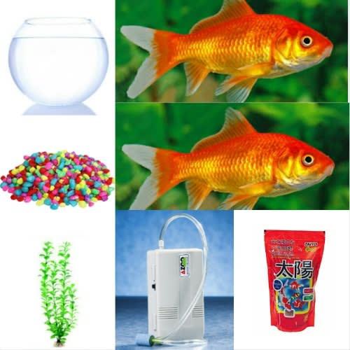 /2/-/2-Comet-Aquarium-Goldfish-Fish-Bowl-Complete-Kit-7537094.jpg
