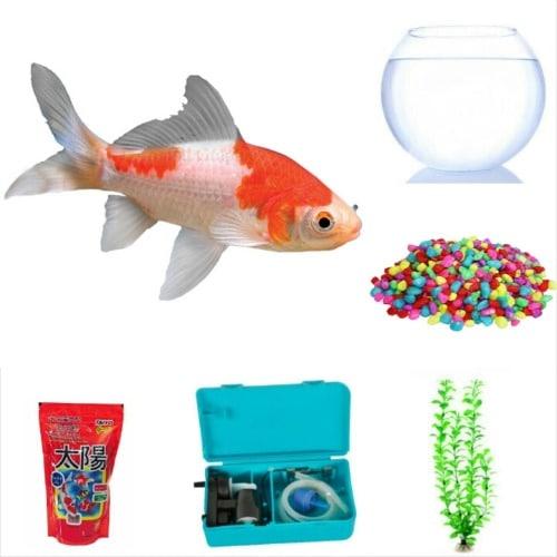 /A/-/A-Calico-Aquarium-Goldfish-Fish-Bowl-Complete-Kit-7183654.jpg