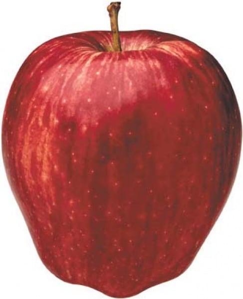 /A/p/Apple-Carton---100-Pieces-5830486.jpg