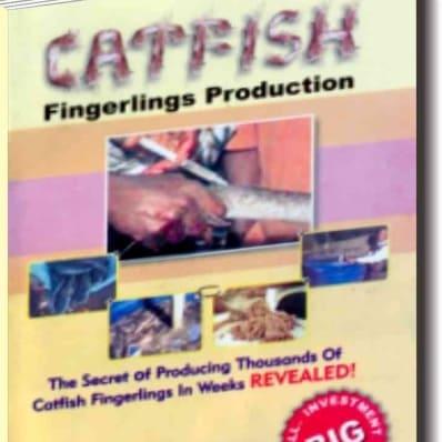 /C/a/Catfish-Fingerlings-Production-3810613.jpg