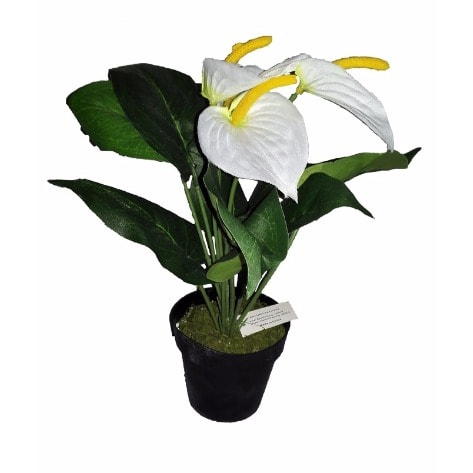 /F/a/Farrah-Potted-Tulip-in-Plastic-Pot-32cm-5977601.jpg