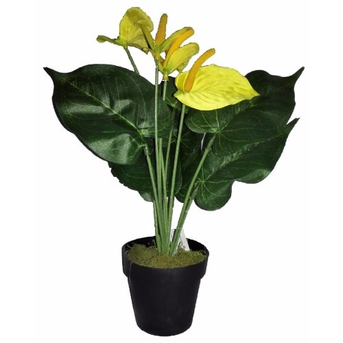 /F/a/Farrah-Potted-Tulip-in-Plastic-Pot-32cm-5977717.jpg