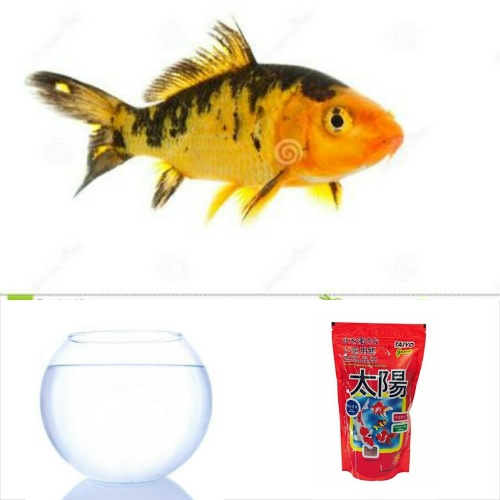 /F/i/Fish-Bowl-Set---Starter-Kit-01-Japanese-Koi-Fish-7540221.jpg