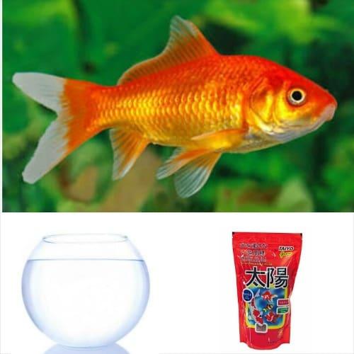 /F/i/Fish-Bowl-Set-Starter-Kit-03-Comet-Gold-Fish-7540216.jpg