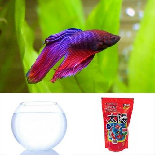 /F/i/Fish-Bowl-Starter-Kit-03---Siamese-Fighter-Betta-Fish-7540159.jpg