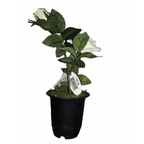 /I/n/Individual-Artificial-Potted-Rose-22cm---White-6224243_1.jpg