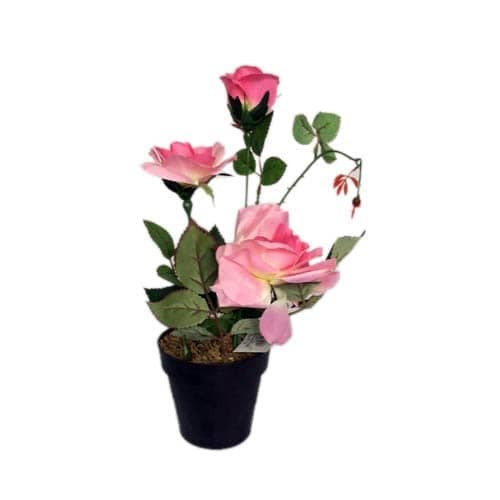 Potted Flower Pink Konga Online Shopping