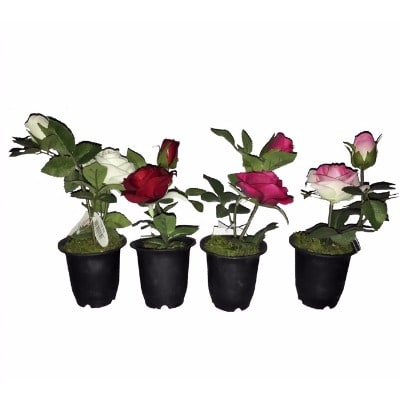 /S/e/Set-of-4-Roses-in-Plastic-Pot-22cm---Multicolor-6134984_1.jpg