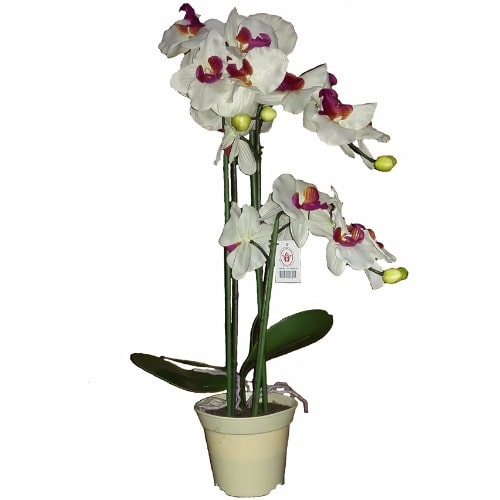 /S/i/Silky-Soft-Moloko-Artificial-Orchid-Flower-in-Plastic-Pot---White--57cm-7615801_1.jpg