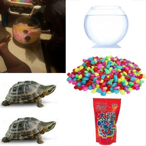 /T/o/Tortoise-Kit-Plus-2-Tortoise-7540711.jpg